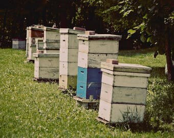 """Canvas wall art photography honey bee hive photograph teal green summer farm country """"Honey Bee Hive"""""""