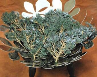 Dried & Preserved Juniper Tips | Dried Juniper | Juniper | Holiday Decor | Winter Decorations