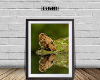 Bird Wall print, Bird Photography, Sparrow Print, nursery  prints, Bird Reflection, home decor.