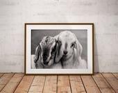 Goat print-Baby Goat Print-Digital Download-Nursery Animal Print-Baby Goat Photo-Nursery print-Nature Print-Lamb Print-Cute Animal Print
