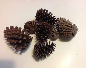 7 Real Florida Pine Cones Natural Pine Cones for Crafts Rustic Home Decor Holiday Assortment Raw Pine Cones Country  RPC1