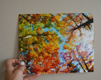 Colorful Fall Leaves 8x10
