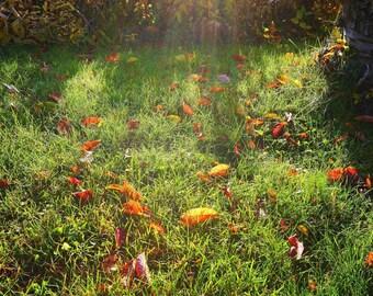 Fall, Digital Downlad, Stock Photo