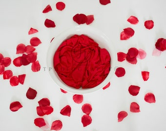 Valentine Digital Backdrop, Newborn Digital Backdrop, Rose Pedal Digital Backdrop