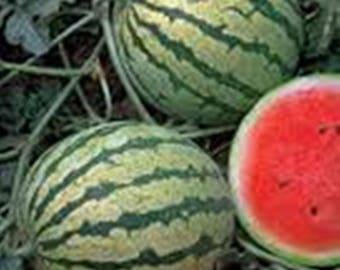 20x Seeds Watermelon Tigr - Tiger Organic Vegetable Melon Seed