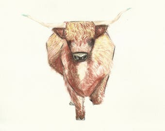 Highland Cattle, Print