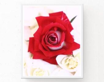 Red Rose Print - Digital Download, Red Rose Art Print, Printable Wall Art, Red Rose Poster, Red Decor, Flower Print, Red Rose Print