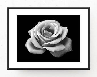 Black White Flower - Rose, Digital Art Print, Printable Wall Art, Modern Home Decor, Rose Photo, Black and White Flower Print, Rose Photo