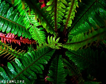 Digital photography : NaturalFern