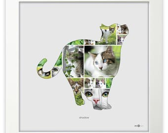 cat standing - photo collage