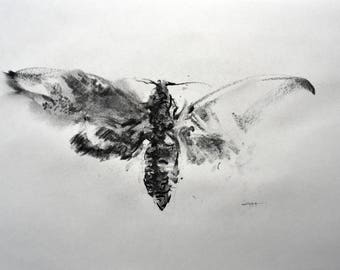Original drawing moth charcoal sketch by artist Ahmad Harun