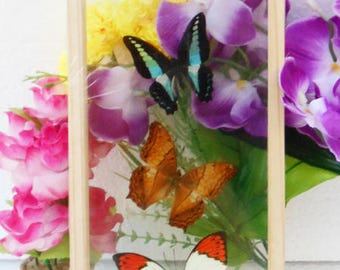 4 Real Mixed Butterflies Taxidermy Double Glass In Frame/BFD04CC