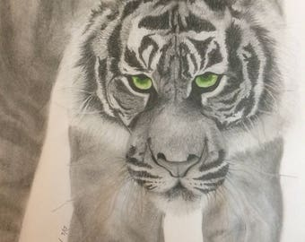 Tiger, an original graphite drawing by Grace Anna