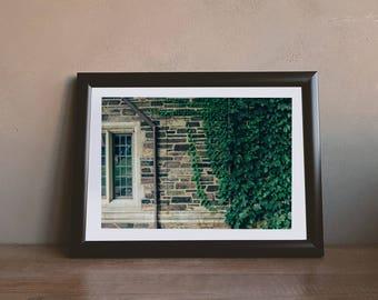 Princeton Vines