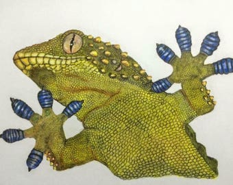 Original Gecko pencil drawing with certificate of authenticity,artwork signed by JRdrawings - pencil portrait