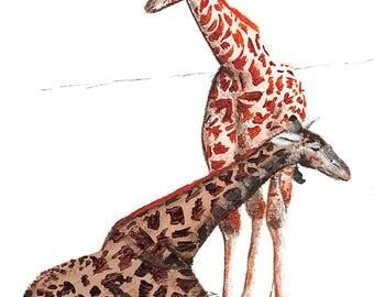 Giraffes (Print)