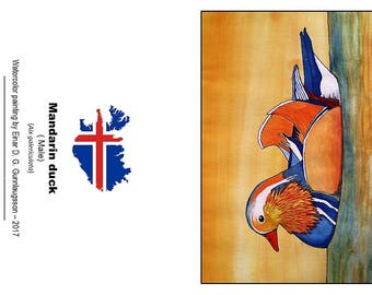 10 postcards with a picture of a beautiful male MANDARIN DUCK.