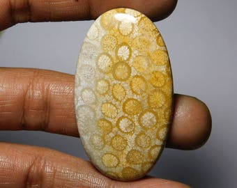 Awesome! Fossil Coral loose gemstone Amazing cabochon gemstone natural Excellent gemstone smooth polish handmade 61.30cts (50x29x5)mm