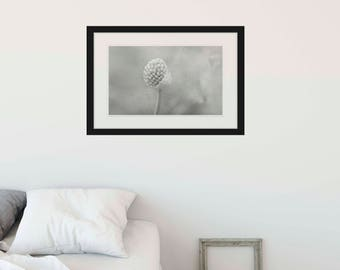 Black and White Flower Nature Photo Digital Download for Printing