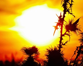 Prickly sunset