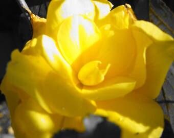Flowers, Floral, Art, Photography, Prints, Home Decor, Decorations