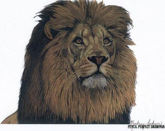 Lion Drawing Colored Pencils Drawing Lion Art Collectible pencil art