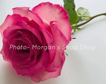 Pink Rose~ digital download