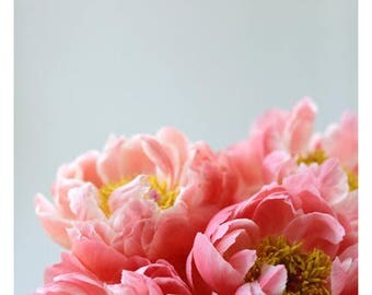 Peony Print - Peony Photograph - Flower Art - Spring Art - Madeline - Fine Art Photograph - Floral Art - Botanical Art Print - Pink Peonies