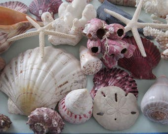 Decorative Seashells, Collection of Large Shells, Starfish and Sand Dollar, Shelf Display, Coffee Table Accent, Beach Housewarming Gift