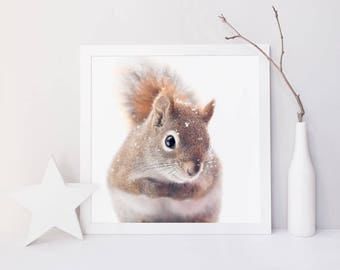 Red Squirrel Art, Nature Photography, Woodland Animal Photography, Woodland Nursery Wall Art, Cute Animal Nursery Art, Winter Photography
