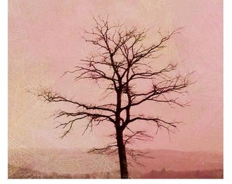 Poster, bare tree and sepia A082
