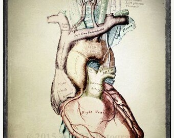 40% OFF SALE Anatomical Heart Art, Oddity, Medical Anatomy Print, Classical Science, Surreal Decor, Scientific Chart, 5x5 inch Fine Art Phot