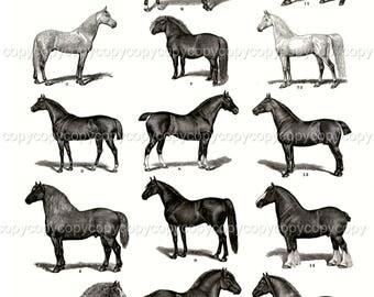 Vintage Printable Horses - Collage Sheet - Printable Download - Scrapbook- Instant Download - Vintage Bakery