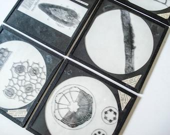 Set of 6 Magic Lantern glass slides with a cellular botany theme