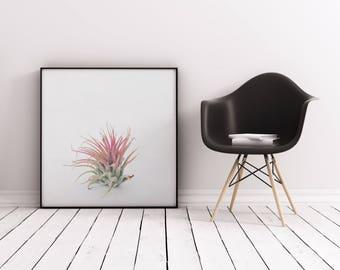 Contemporary Art, Botanical Print, Plant Wall Art, Leaf Art - Air Plant