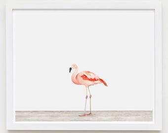 Animal Art Print. Flamingo No. 1. Bird Animal Wall Art. Animal Decor.