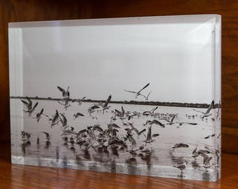 Seagulls in Flight Black and White film image mounted to Acrylic Block