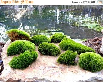 Save25% Live Moss Samples-Small Snack Pack Bags of Moss you choose the one you want-Mood Moss-fern Moss-Pillow Moss