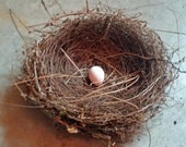 Natural Real Bird Nest with Real Egg for Crafts, Wreaths or Floral Arrangements