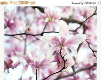 Pink Magnolia Photograph or Canvas Art, Pink Flower Photo, Cottage Chic Decor, Pink Magnolia Print, Floral Photography, Spring Flower Photo