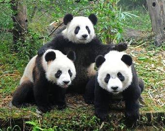 Cross Stitch PATTERN graph for panda bears