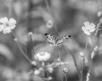 Meadow Butterfly, Nature Photography, Fine Art Print, B&W, Spring Flowers, Garden, Insects, Butterflies Wall Art, Floral Home Decor
