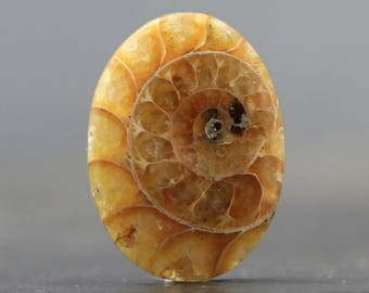 Ammonite Cabochon Fossil Loose Fossilized Prehistoric Gemstone (CA9164)