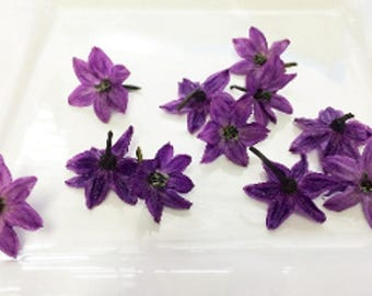 100 + Organic, PURPLE PEPPER BLOSSOMS, Edible Deep Purple Flowers, Salads, Garnishes Hors d'oeuvre Toppers Free Shipping Overnight
