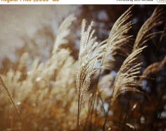 Christmas in July Soft as Wheat Fine Art Photography Autumn Fall Brown Gold Warm Earth Tones Farmhouse Country Home Decor Wall Art