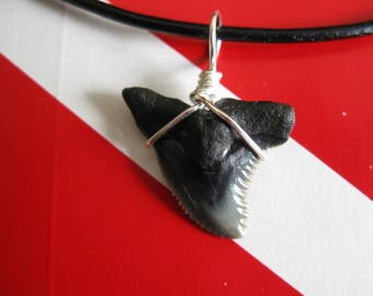 "Shark Tooth Necklace, ""Snaggletooth"" Shark, Fossil Shark tooth, Venice-Florida, Leather cord, Silver plated wire wrap"