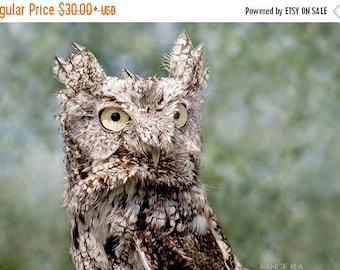 ON SALE Screech Owl, Bird Photography, Owl Decor, Owl Pictures, Owl Decor, Photography, Bird Wall Art, Nature Print, Raptor, Bird of Prey, O