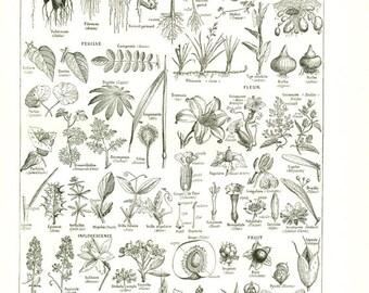 Botanique vintage 1948 Poster de botanique vintage  Cadeau pour botaniste Décoration botanique Deco salle de classe sciences naturelles