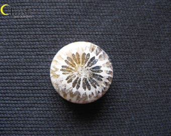 Single Brownish Black Flower Cream Gray Fossil Coral Petoskey Round Cabochon 13x5mm