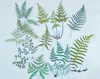 Ferns -  Die cut style, Botanical - Scrapbooking Paper Craft Pack,   Embellishments, Cut outs PE156